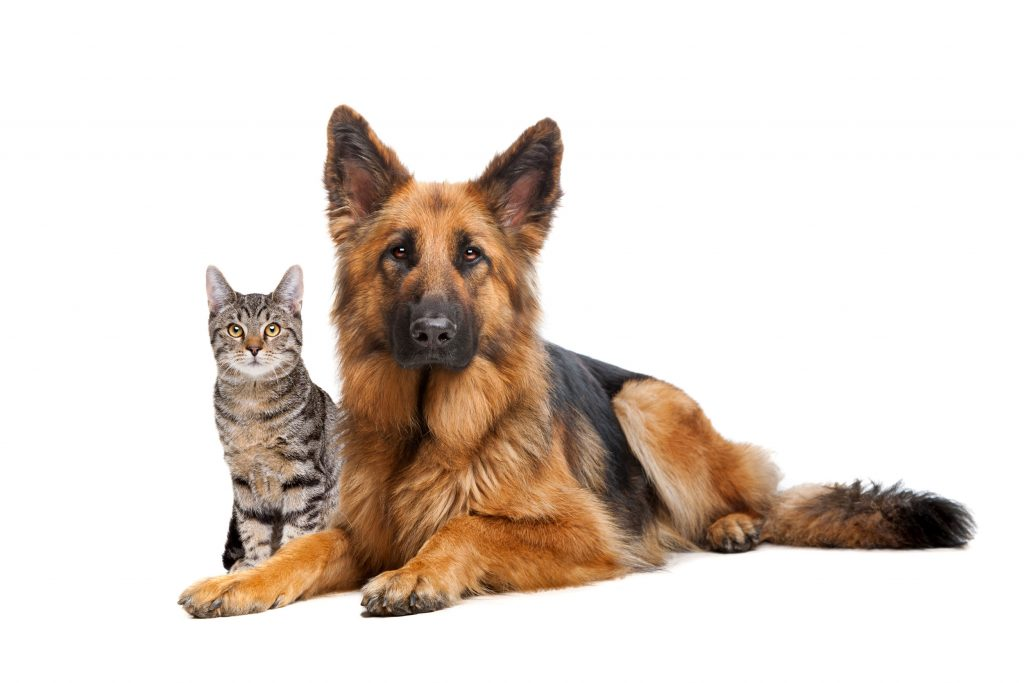 Pet Insurance by Leisure Guard Insurance Services